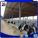 Сегменте панельного домостроения в легких стальных структуру для стальные здания фермы крупного рогатого скота