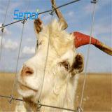 아프리카 농장 담 또는 필드 담 또는 가축 담 그물세공에서 대중
