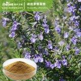 100% natural extrato vegetal extrato de alecrim