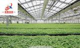 Парник Venlo стеклянный для растущий овоща и цветков