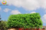 Erba artificiale molle di colore dinamico per il campo da giuoco dei bambini
