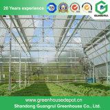 식물성 설치를 위한 필름 녹색 집