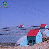 Китай заводская цена солнечных выбросов парниковых газов для выращивания овощей растет