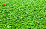 Fuerte Superficie Tenis grillo hierba artificial
