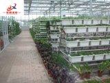 Plantação estereofónica na casa verde