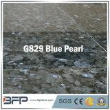 Голубая плитка пола гранита перлы для настила, стены, ванной комнаты