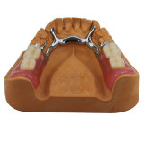 Le CCP Cadre avec les dents de résine acrylique