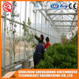 Agricultura Multi Span Glass Green House for Vegetables
