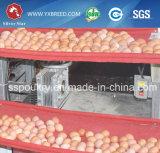 Máquina de cultivo de malla de alambre de pollo para capas de pollo