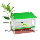 Yyb Window Bird Feeder avec des trous de drainage