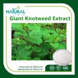Extracto gigante el 50%, el 98%, el 99% Resveratrol de Knotweed de la planta natural