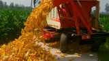 Colheitadeira de milho em colhedoras de rebentamento de máquina