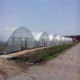 Qualitäts-multi Überspannungs-landwirtschaftliches Film-Gewächshaus