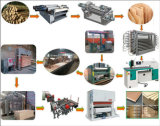 Machine van het Vernisje van de Productie van het triplex de Houten