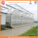 Agriculture/Commercial Polyethylene Film Tunnel Green Houses for Strawberry/Rose