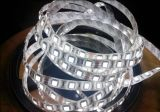 5M 5050 White DC12V 300 SMD LED Strip Light flexible non étanche (éco-F5050W60W-12V)