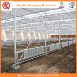 Venlo Type Solar Green Houses com folha de PC