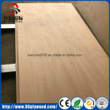 Sr. Glue Commerical Plywood Price de la base del álamo 18mmx1220X2440