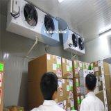 Nahrungsmittelkaltlagerungs-Kühlraum für Logistik