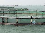 Les cages de flottement de pisciculture d'aquiculture de cercle