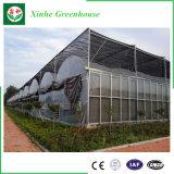 농업 설치를 위한 현대 플레스틱 필름 온실
