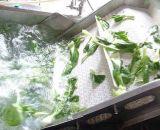 نباتيّة [درينغ] و [وشينغ مشن] مع سعر جيّدة