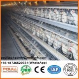 Тип автоматические клетки Automatica батареи слоя яичка цыпленка/курочки