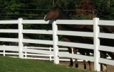 De goedkope Omheining van het Paard van pvc/de Omheining van de Landbouwgrond/de Omheining van de Weide