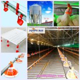 Set pieno Equipment nel mandriano di Poultry House From Super