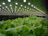El LED impermeable crece ligero para todas las plantas