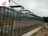 Xiamen 시에 있는 유리제 온실