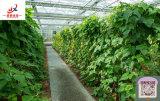 Hohe стандартов и высокое качество стекла/PC выбросов парниковых газов для высевания