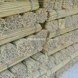 Crecimiento de bambú natural del manzano del soporte