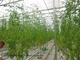 Het hete Hydroponic Groeiende Systeem van de Verkoop voor Groente