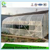 최신 판매는 꽃을%s 경간 Commerical 녹색 집을 골라낸다