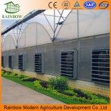de KoelVentilators van de Druk van Negtive van de Grootte van 1380*1380*450mm voor het Landbouwbedrijf van het Gevogelte /Greenhouse