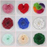 9~10cm Muilticolor préservé décoratifs rose éternelle des fleurs pour l'arrangement