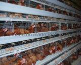 安くタイプ鶏の鳥電池の家禽装置のケージ
