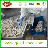 Pâte de gingembre biologique congelée IQF avec Brc Cert
