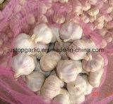 Ярко-красный/обычный белый чеснок из Китая