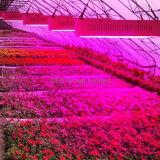 300W wachsen volle Pflanze des Spektrum-LED für Hydroponik-System wachsen Raum-Strahlungswinkel 110 Grad hell