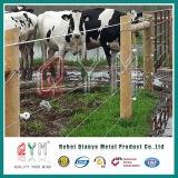 Ziege, die Zaun-Bereich-Filetarbeits-Bauernhof-Zaun-Vieh-Zaun bewirtschaftet