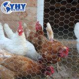 Malha de arame galvanizado de frango e de Malha de Arame Hexagonal com revestimento de PVC