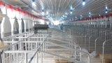 Пер беременность оборудования свиньи для хавроньи в 2017