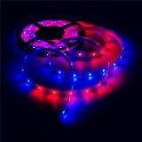 2812 5V 5050 lumières intrinsèques de corde du Pixel RVB DEL