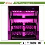 Usine Keisue usine ferme verticale avec LED grandir la lumière