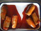 Las ventas en caliente de cultivo fresco de calidad Premium Las conservas de caballa en salsa de tomate