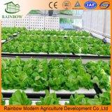 Sistemi idroponici verticali della serra crescenti per lattuga