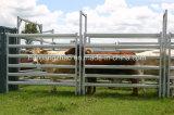 Оцинкованный крупного рогатого скота с 40мм*80мм овальный топливораспределительной рампе