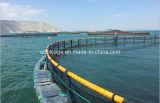 Cages en mer (20130616_105021) 1
